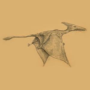 Des ptérodactyles encore vivants?