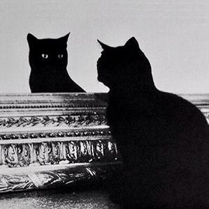 chat miroir
