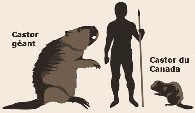 castor géant